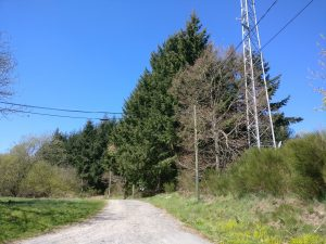 photo of side road, with telecom tower