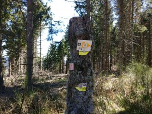 A wood post with various somewhat cryptic signs attached