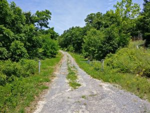 A gravel road flanked by trees.